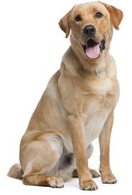 Collar para perros razas grandes ceta dog