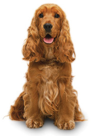 collar-de-perro-talla-mediana-ceta