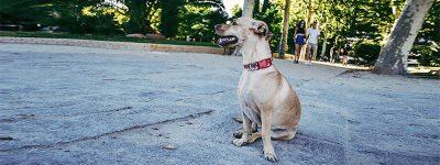 Consejos para acabar con el Estrés de los perros