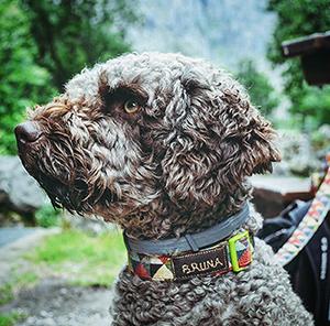 Collares para Perros Personalizados Baratos Ceta Dog