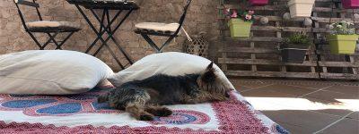Camas para Perros Originales, Resistentes y Baratas
