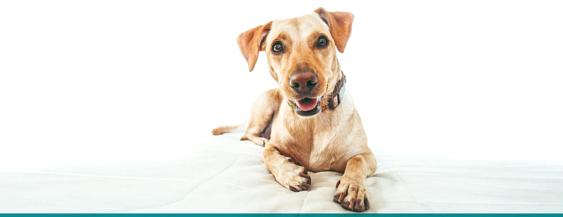 collares para perros personalizados ceta dog